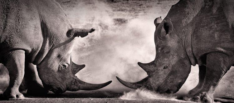 Rhinos-office-politics